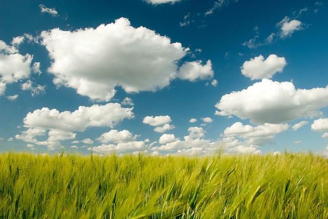 An image of cloud